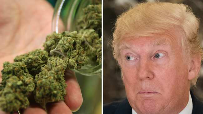 U.S. Cannabis Firms Plead With Trump To Help Them Compete With Canada