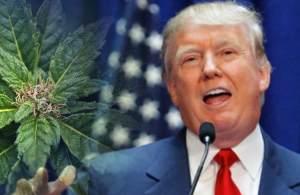 Trump Plans To Back Legal Medical Marijuana After Midterms, GOP Congressman Says