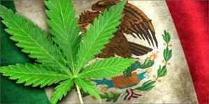 Mexico Inches Toward Legal Cannabis