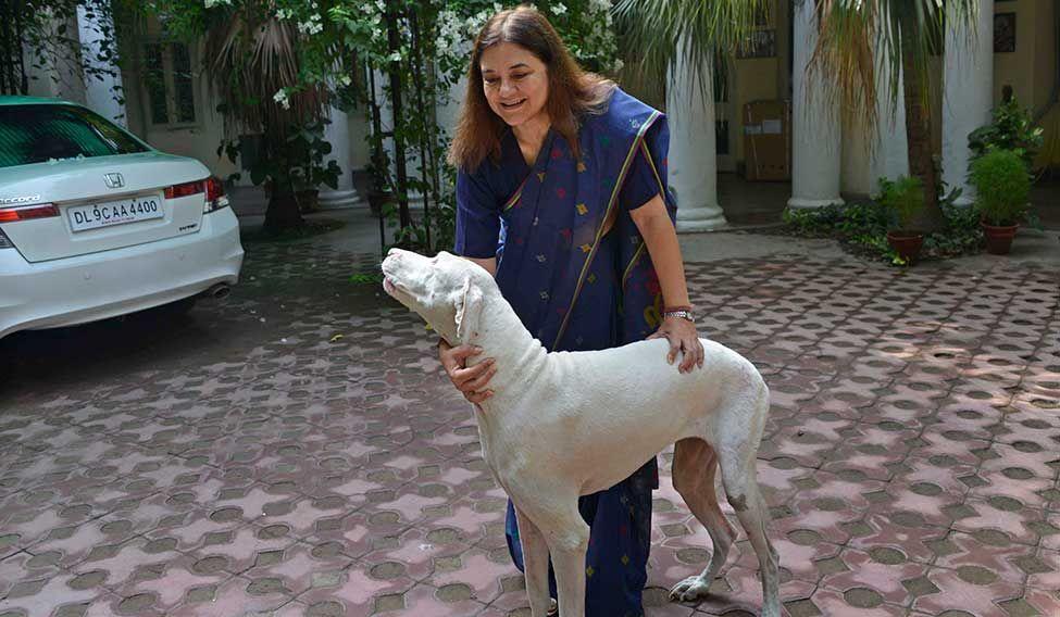 Image result for menaka gandhi & stray dogs