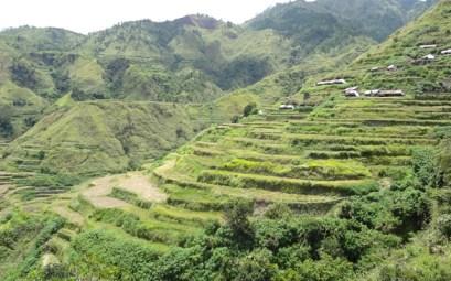 Buscalan - rice terraces
