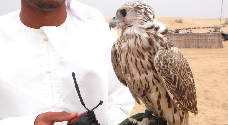 Dubai desert safari - falcon
