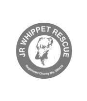 JR Whippet Rescue, founded by Joanna Russell