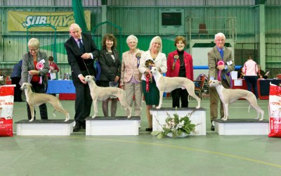 The Whippet Club Championship Show Results – Saturday 4th April 2015