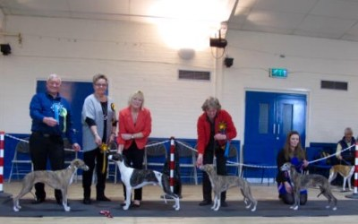 The Whippet Club Open Show – Saturday 24th September