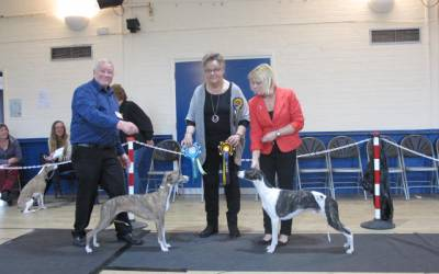 The Whippet Club September Open Show 2016 – Schedule and entry form