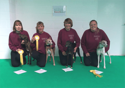 Whippet Club Obedience dogs