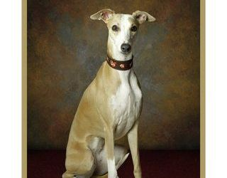 Whippet Calendar 2016 Now Available!