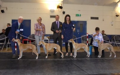 Whippet Club Open Show 24 September – Dog Critique