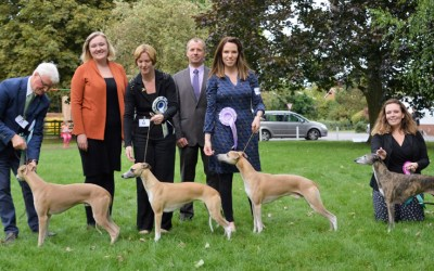 Whippet Club Open Show 24th September – Results