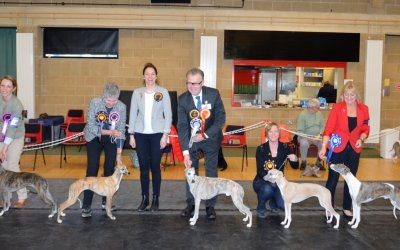 The Whippet Club Limited Show Results – Saturday 21th January 2017