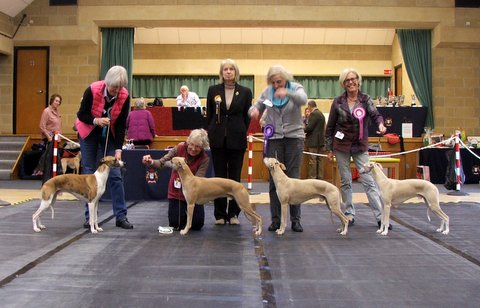 Whippet Club Limit Show - Jan 18 Dog Winners