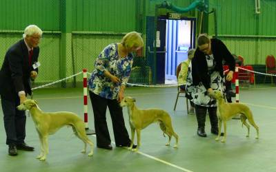 Whippet Club Championship Show 6 April 2019 – Entry Form and Schedule