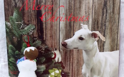 JR Whippet Rescue Christmas Cards 2020