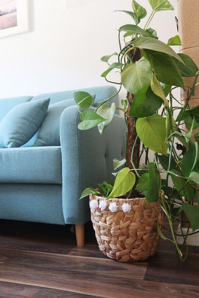 Französischer Flair fürs Wohnzimmer und ein Blumentopf mit kleinen Extras