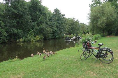 Enten füttern im Vondelpark