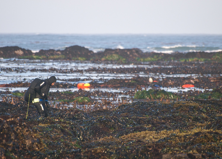 Abalone Divers on Mendocino Coast Low Tide