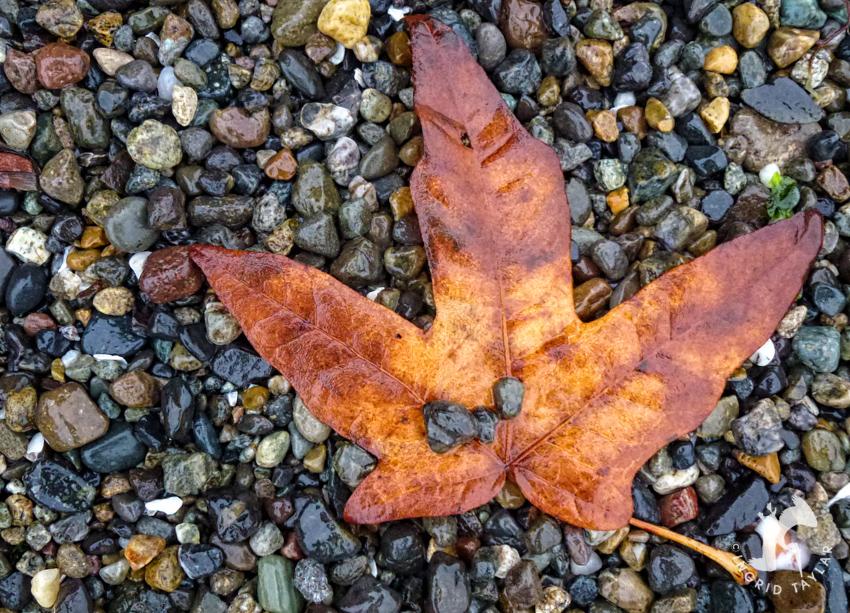 Autumn Leaf on the Beach