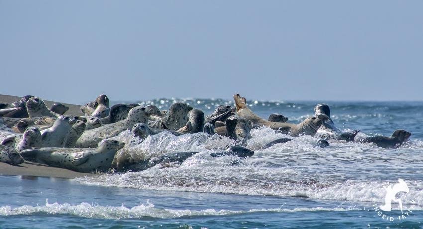 Waves of Seal