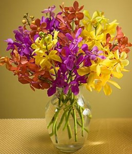 Mokara-Floral