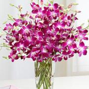 Dendrobium Orchids $120.00