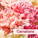 birFlow_carnations Birthday Flowers