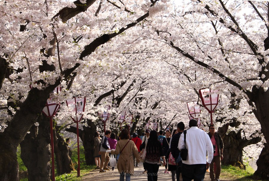 Japan is beautiful throughout the year. What season would you prefer to visit?