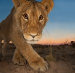 © Hannes Lochner (SOUTH AFRICA) Curiosity and the cat