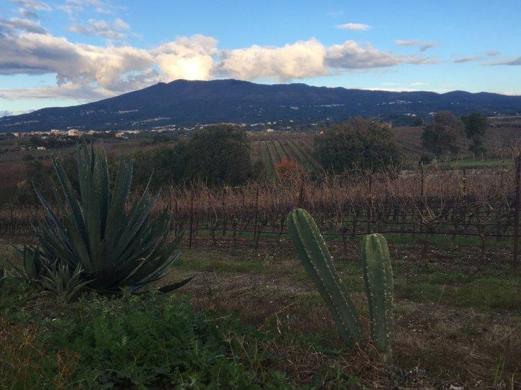 Roccamonfina and the Villa Matilde vineyards