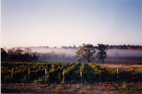 Fog over the Gilbert Wines vineyards is indicative of the cool climate effects of the Great Southern region