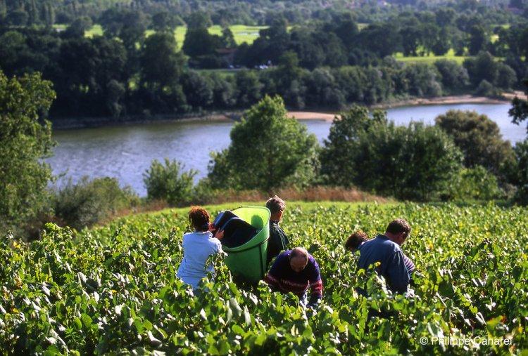 Harvest along the Loire