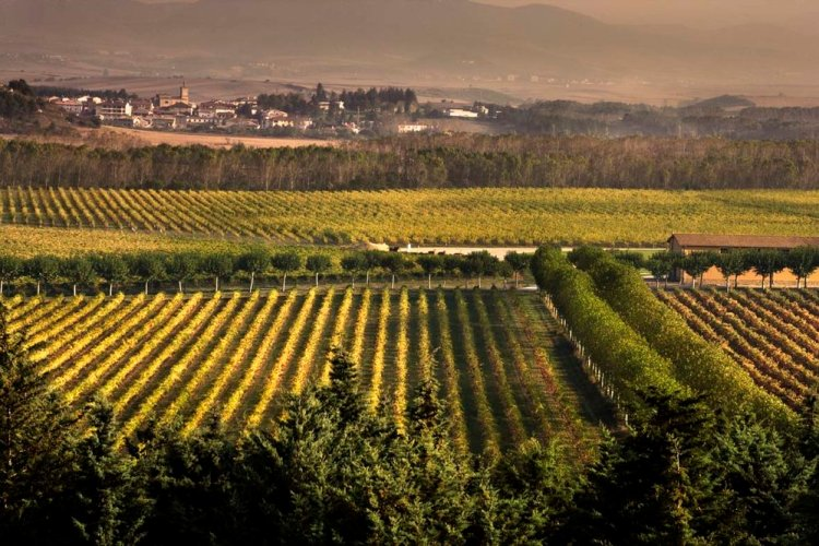 Navarra is a region that is courageously reinventing itself to find its own distinct identity