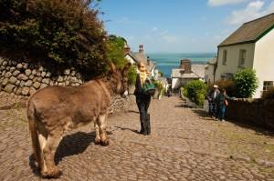 The donkeys of Clovelly
