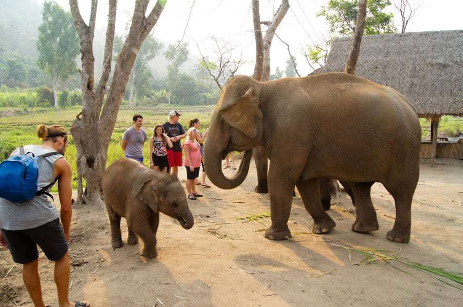 Ecotourism-Resorts-You-Need-to-Visit-ethical-elephant-sanctuary-