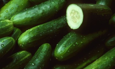 health benefits of cucumber, benefits of cucumber, what are the benefits of cucumber