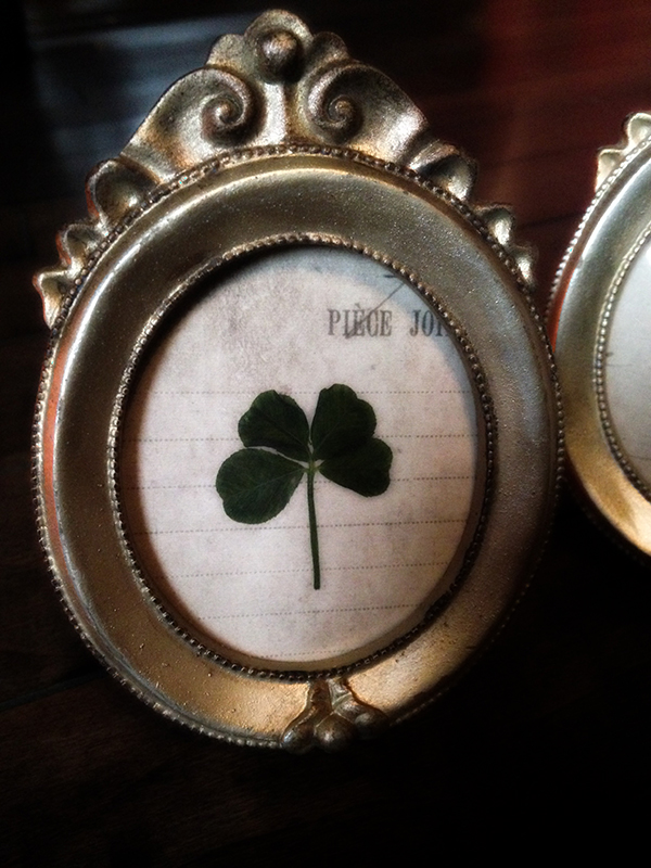 Real Four Leaf Clover