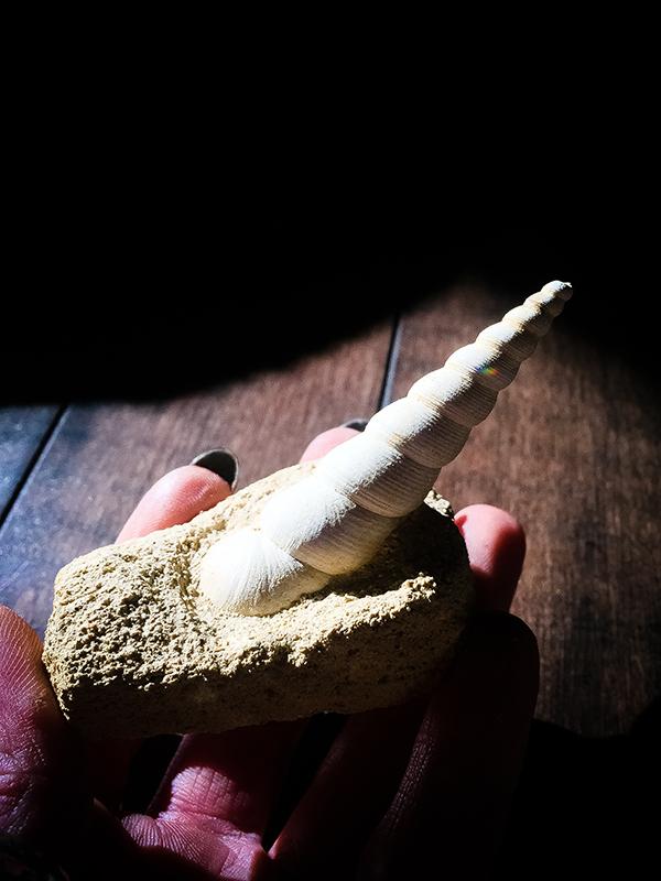 The Unicorn Fossil