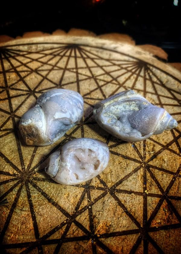 Druze Conch Fossil