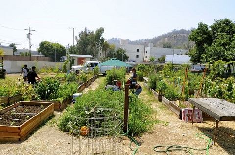 Cyndy Hubach Community Garden Update