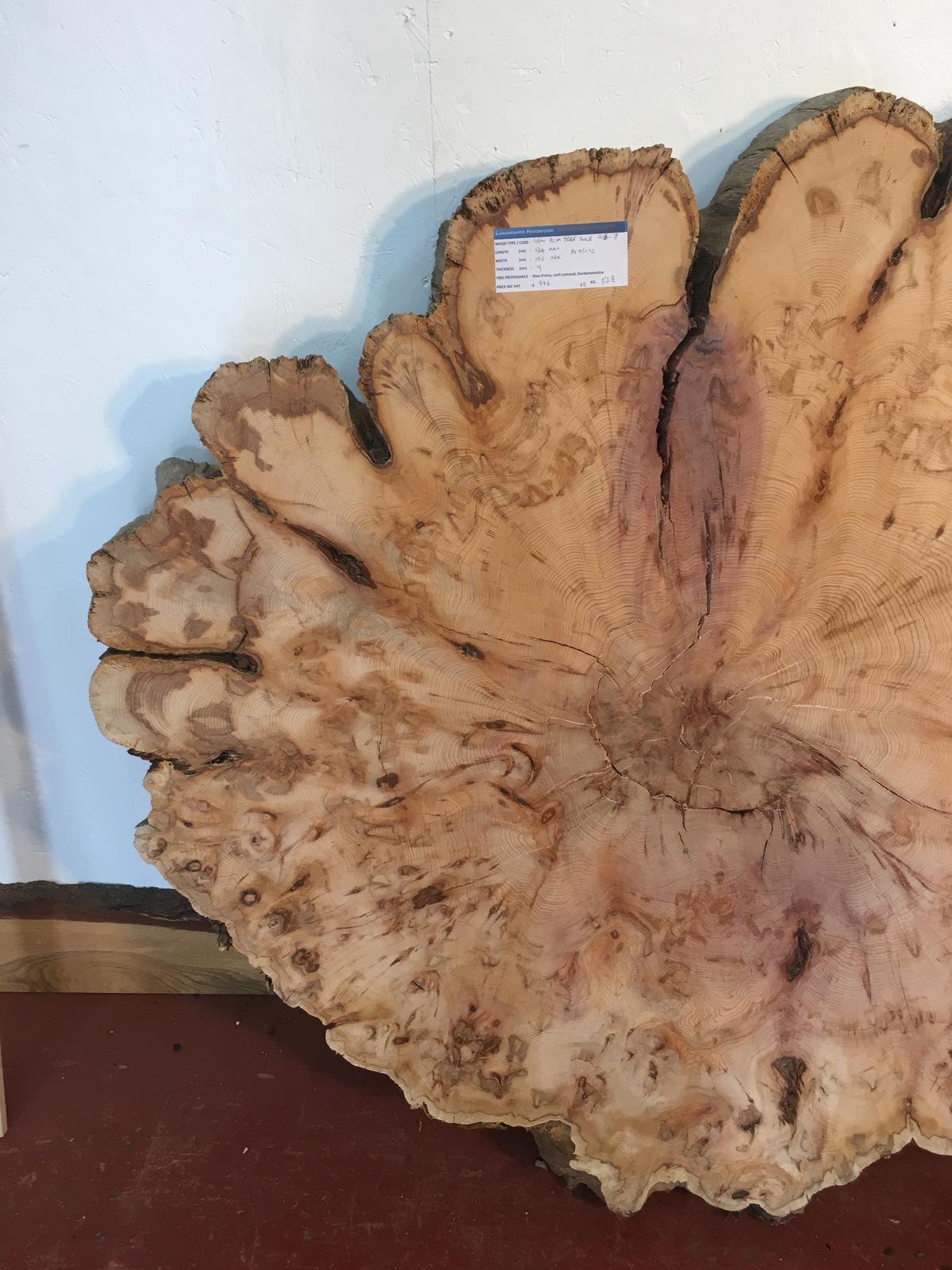 Yew Tree Slice 0916 7 Natural Waney Live Edge Slab The