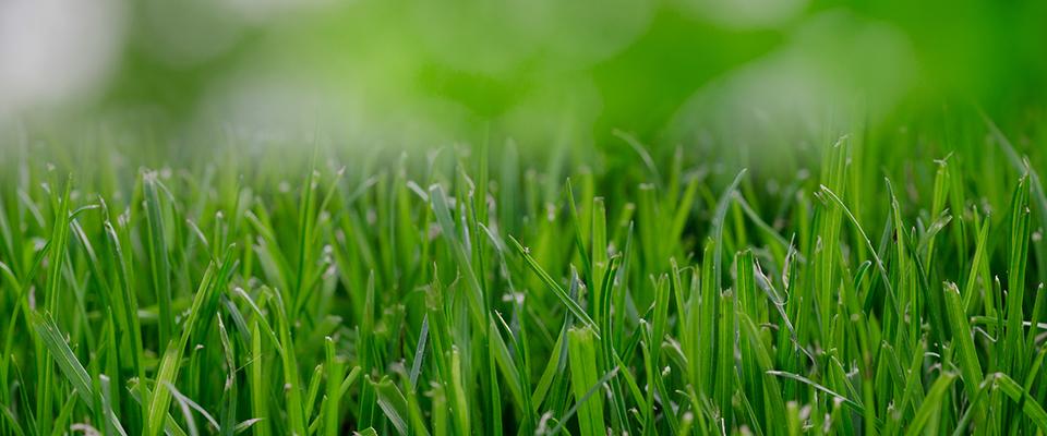 lawn_thewordisbond