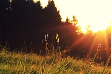 sunshine-DIZZY-The-Ill-One-thewordisbond