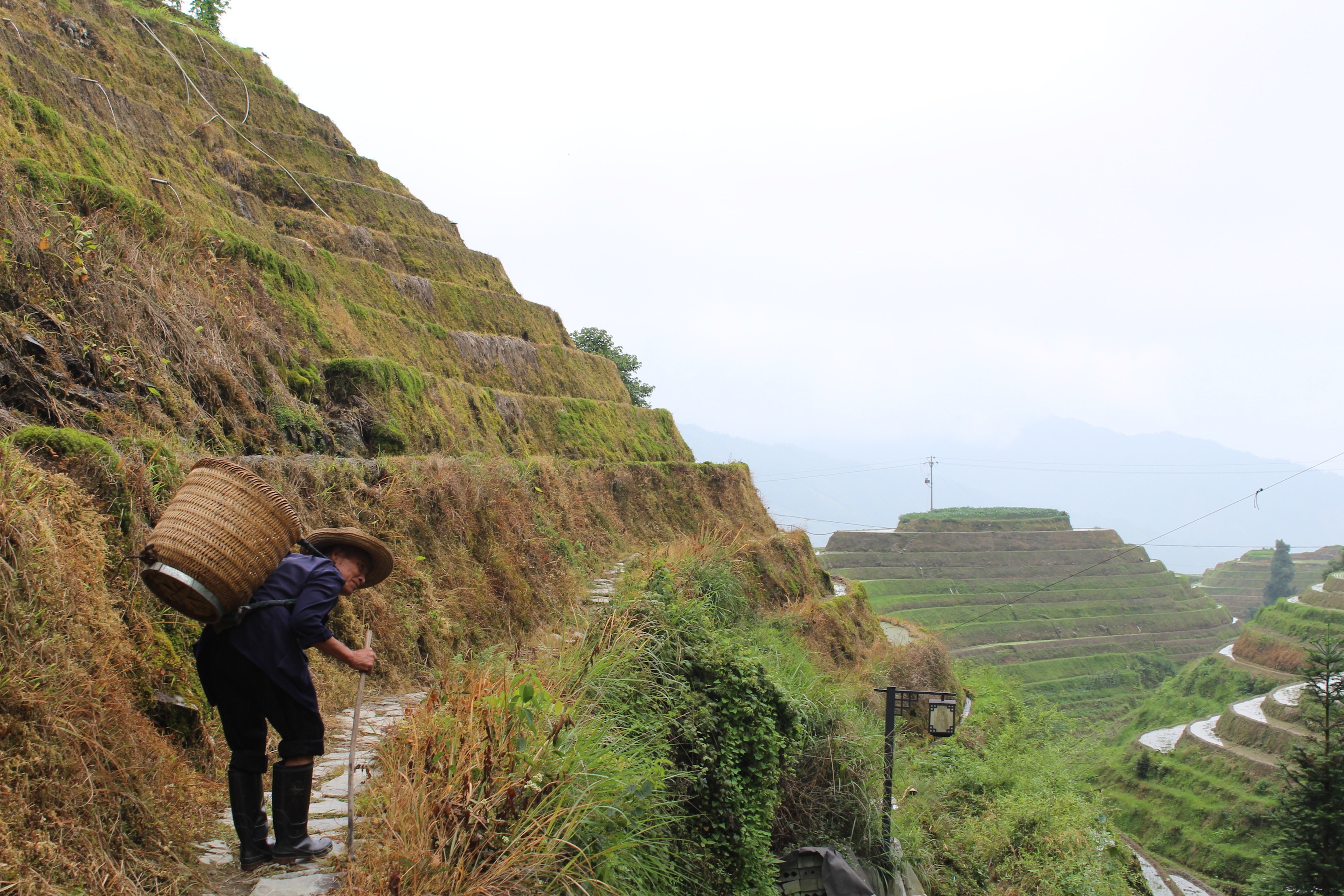 longji-rice-terrace-1