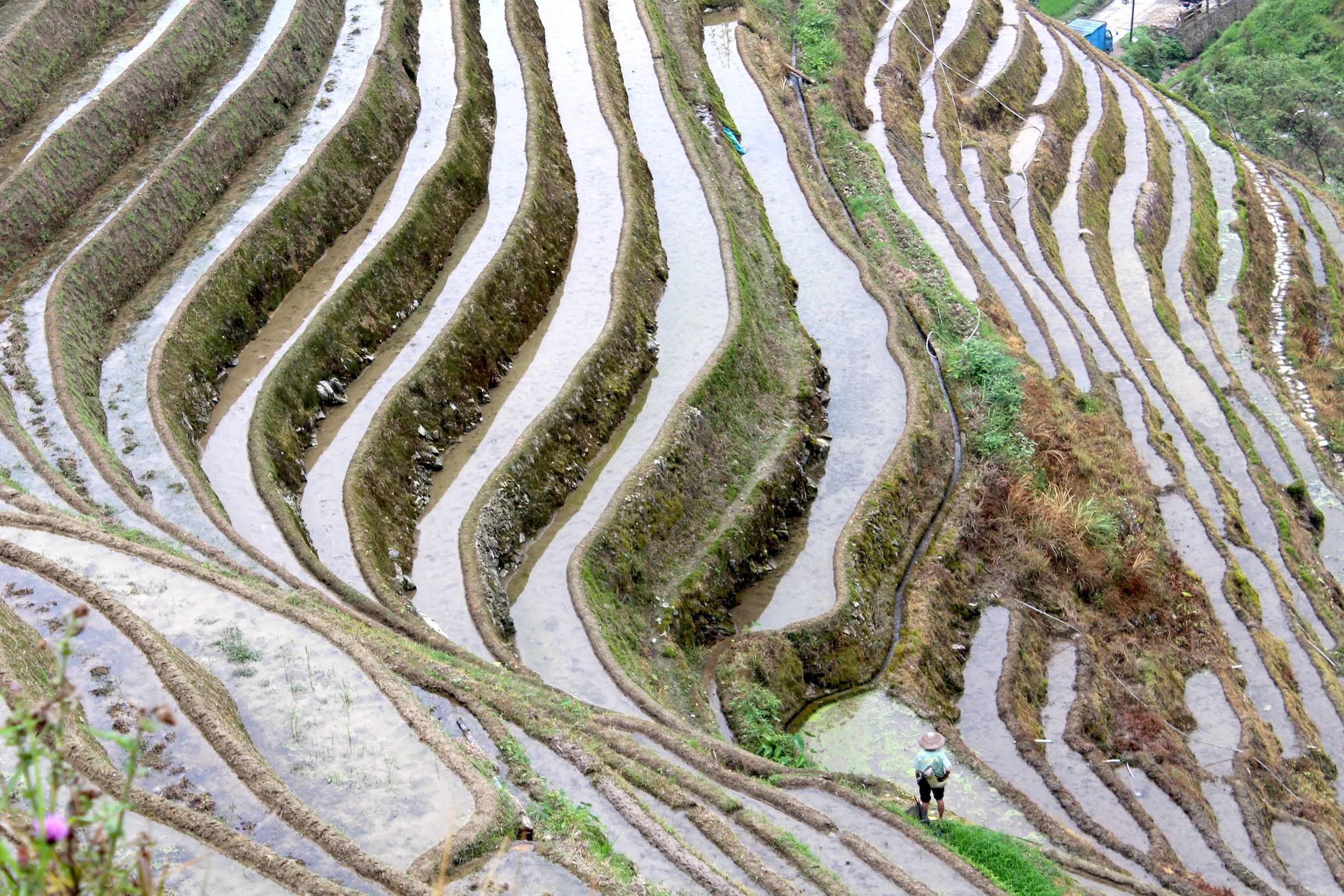 longji-rice-terrace-3