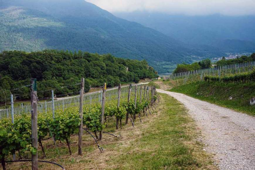 A view of a road passtring through a vineyard, with a mountain in the background
