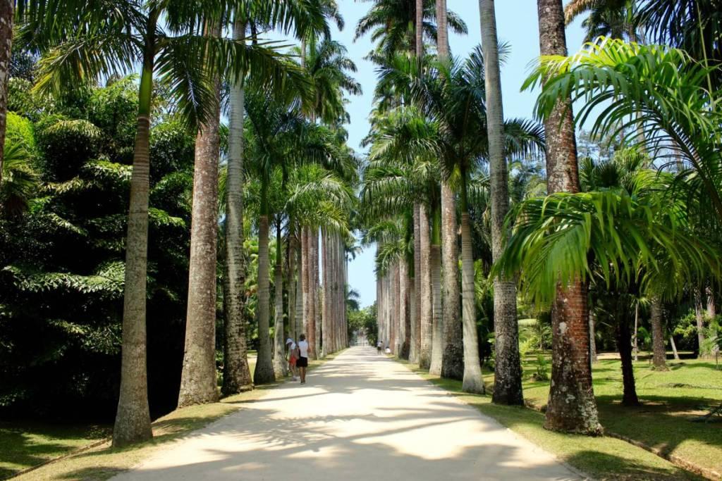Jardim Botanîco- Rio de Janeiro- Brazil