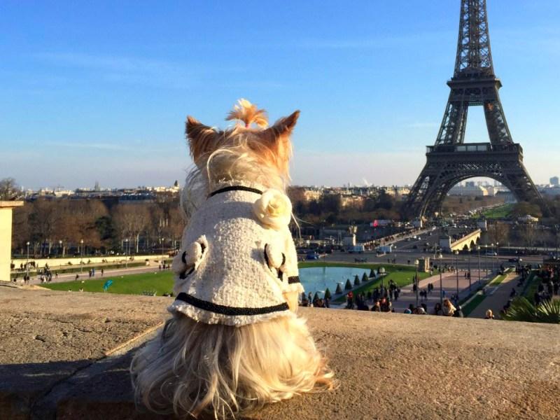 viajar a paris con perro Viajar a Paris con perro viajar a paris con perro hotel de nell lujo mascotas francia