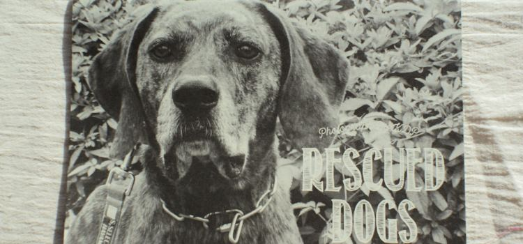 KDP『RESCUED DOGS』カレンダー 2017