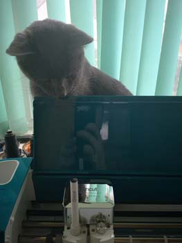 Raylan the cat looking at Cricut Air Explorer 2 while it was cutting