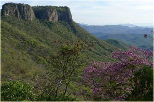 Monte Mojino Sonora (Google)